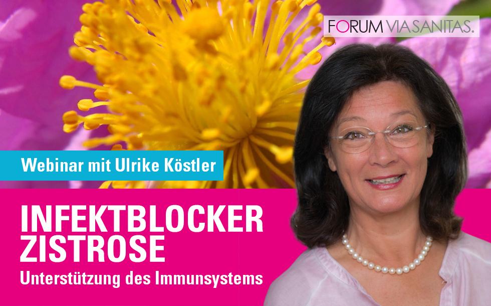 Infektblocker Zistrose - Unterstützung des Immunsystems, Webinar mit Ulrike Köstler